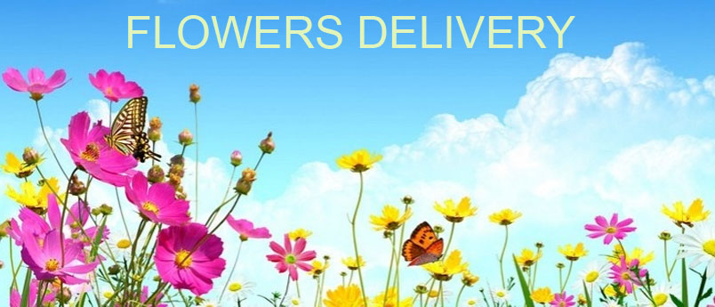 Send Flowers to CBD Belapur