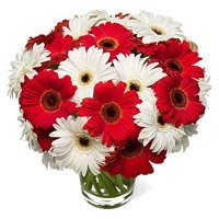 Online Best Flowers to Mumbai : Red White Gerbera