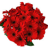 Send Flowers to Mumbai : New Year Flower to Mumbai