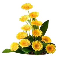 New Year Flower Delivery in Mumbai - Yellow Gerbera