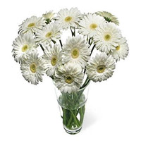 Online Valentine's Day Flower Delivery in Mumbai - White Gerbera