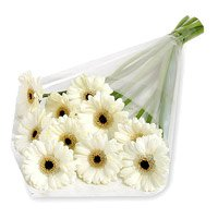 Send Flowers to Mumbai - White Gerbera