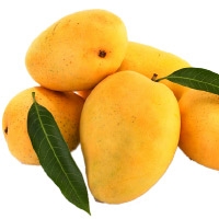 Friendship Day Gifts Online of 12 Pcs Mangoes Basket for Loved ones to Mumbai