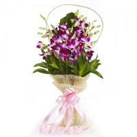 Deliver Holi Flowers to Mumbai